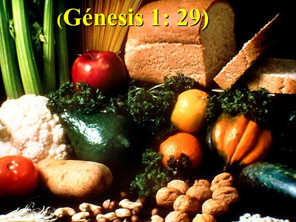 (Génesis 1: 29)
