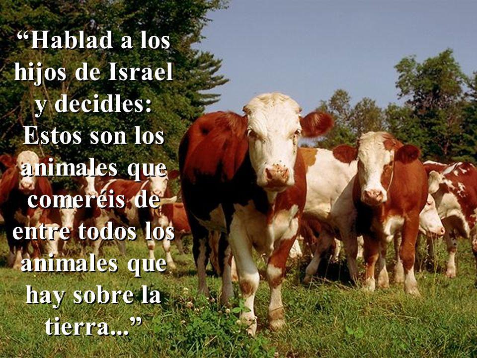 Hablad a los hijos de Israel y decidles: Estos son los animales que comeréis de entre todos los animales que hay sobre la tierra...