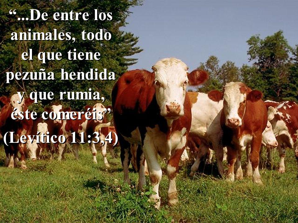 ...De entre los animales, todo el que tiene pezuña hendida y que rumia, éste comeréis