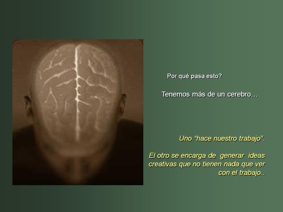 Tenemos más de un cerebro…