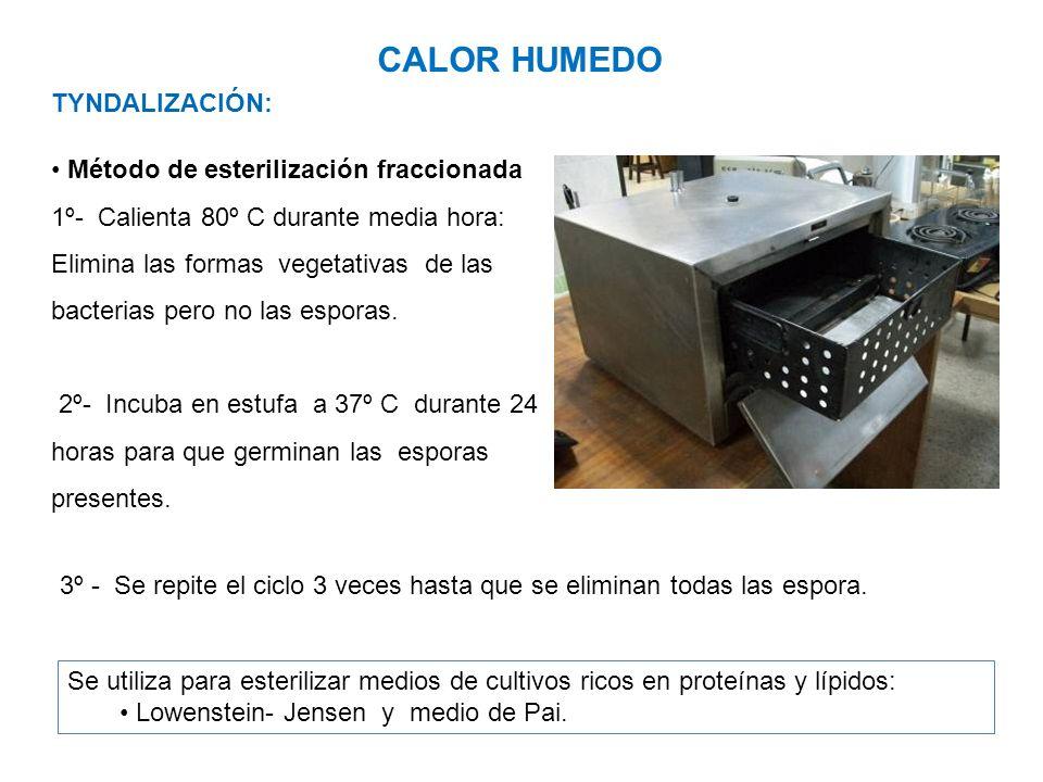 CALOR HUMEDO TYNDALIZACIÓN: