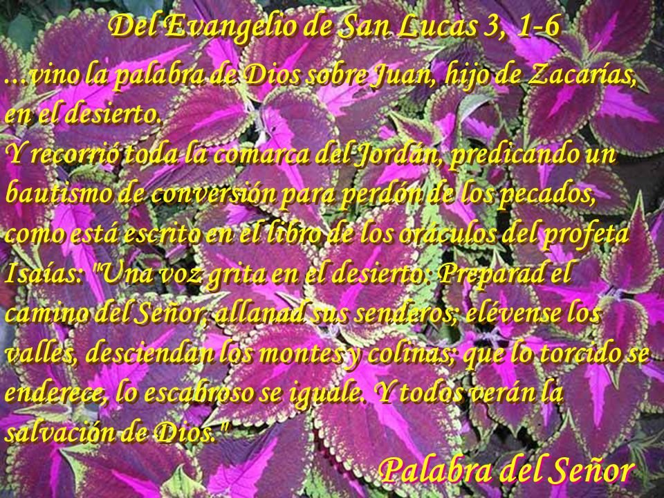 Del Evangelio de San Lucas 3, 1-6