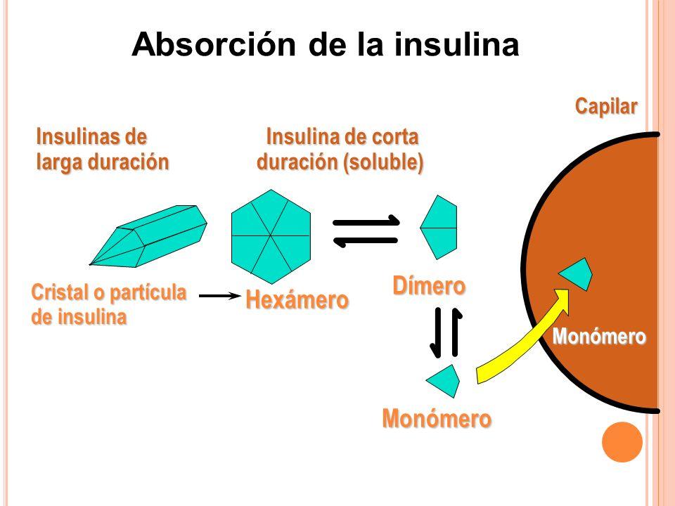 Absorción de la insulina Insulina de corta duración (soluble)