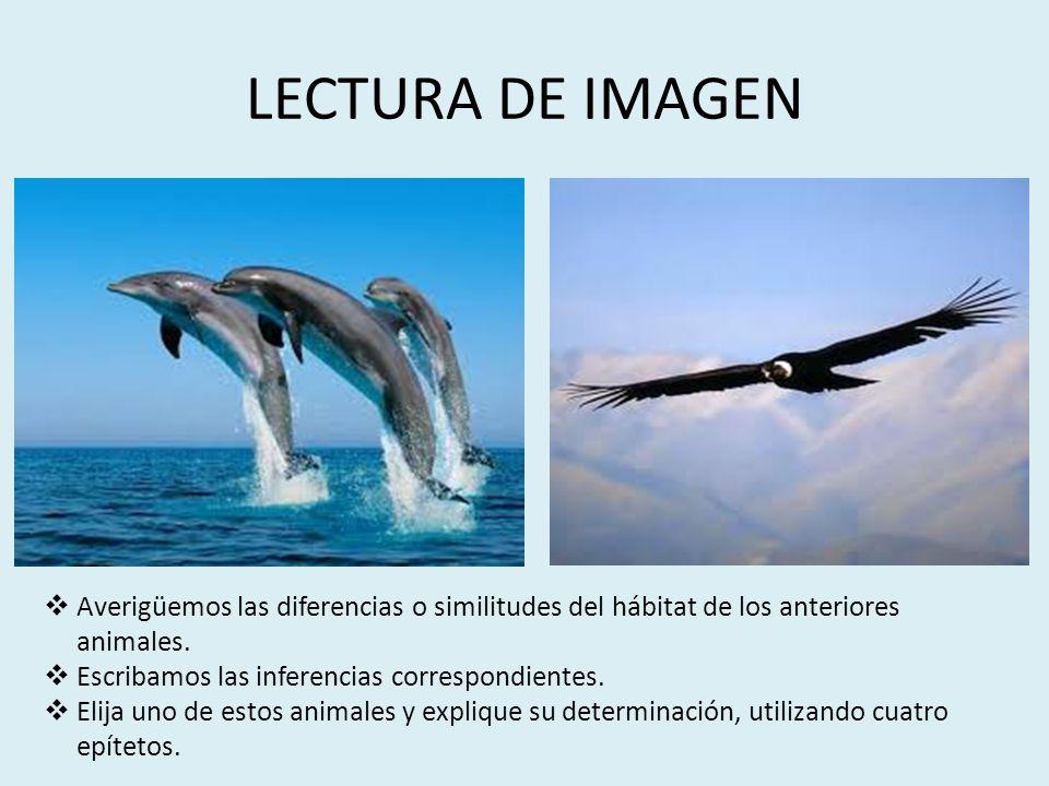 LECTURA DE IMAGEN Averigüemos las diferencias o similitudes del hábitat de los anteriores animales.