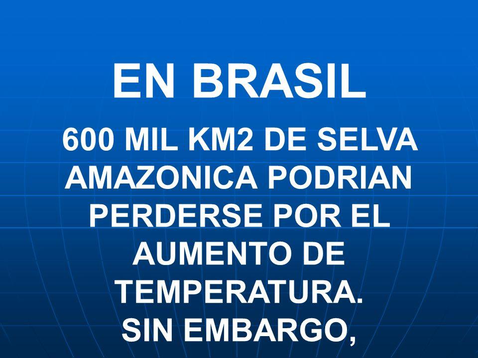 EN BRASIL 600 MIL KM2 DE SELVA AMAZONICA PODRIAN PERDERSE POR EL AUMENTO DE TEMPERATURA.