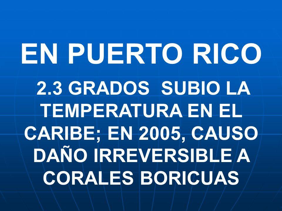 EN PUERTO RICO 2.3 GRADOS SUBIO LA TEMPERATURA EN EL CARIBE; EN 2005, CAUSO DAÑO IRREVERSIBLE A CORALES BORICUAS.