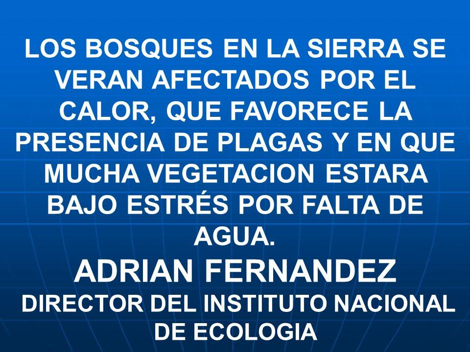 DIRECTOR DEL INSTITUTO NACIONAL DE ECOLOGIA