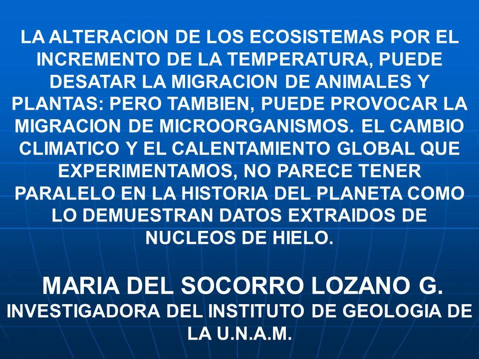 MARIA DEL SOCORRO LOZANO G.
