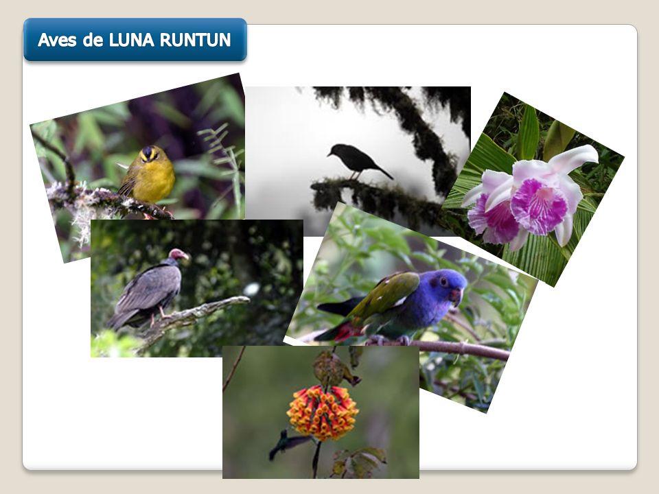 Aves de LUNA RUNTUN