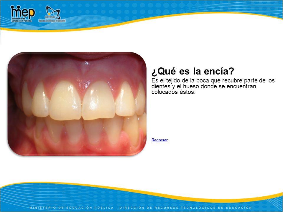 ¿Qué es la encía Es el tejido de la boca que recubre parte de los dientes y el hueso donde se encuentran colocados éstos.