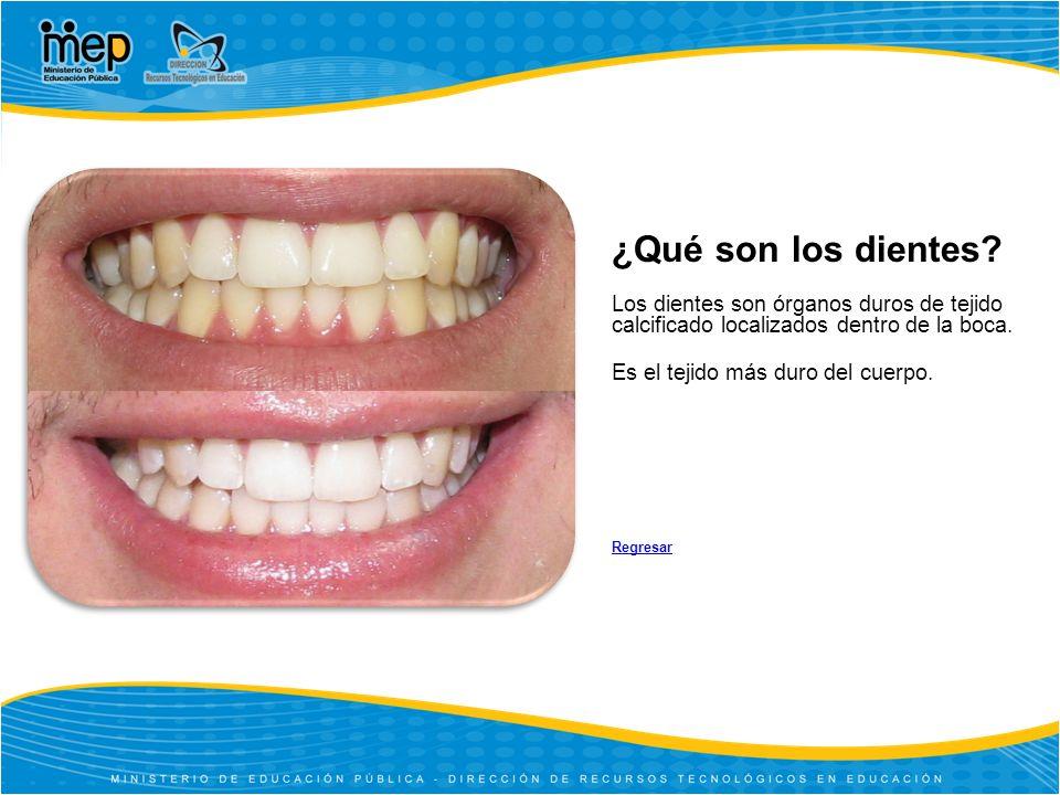 ¿Qué son los dientes Los dientes son órganos duros de tejido calcificado localizados dentro de la boca.