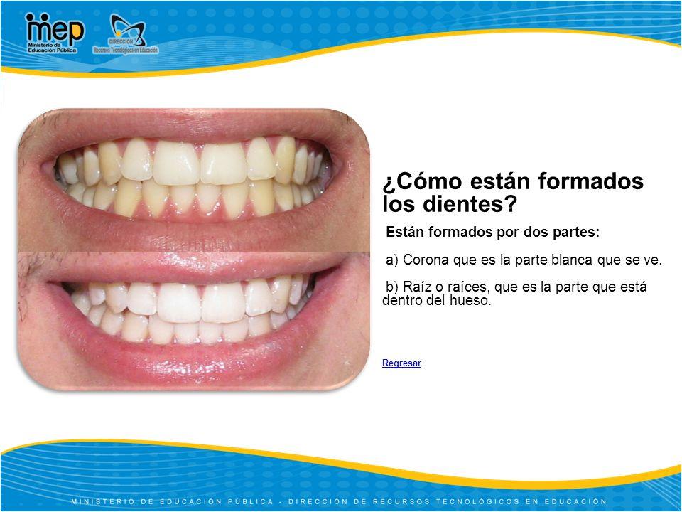 ¿Cómo están formados los dientes