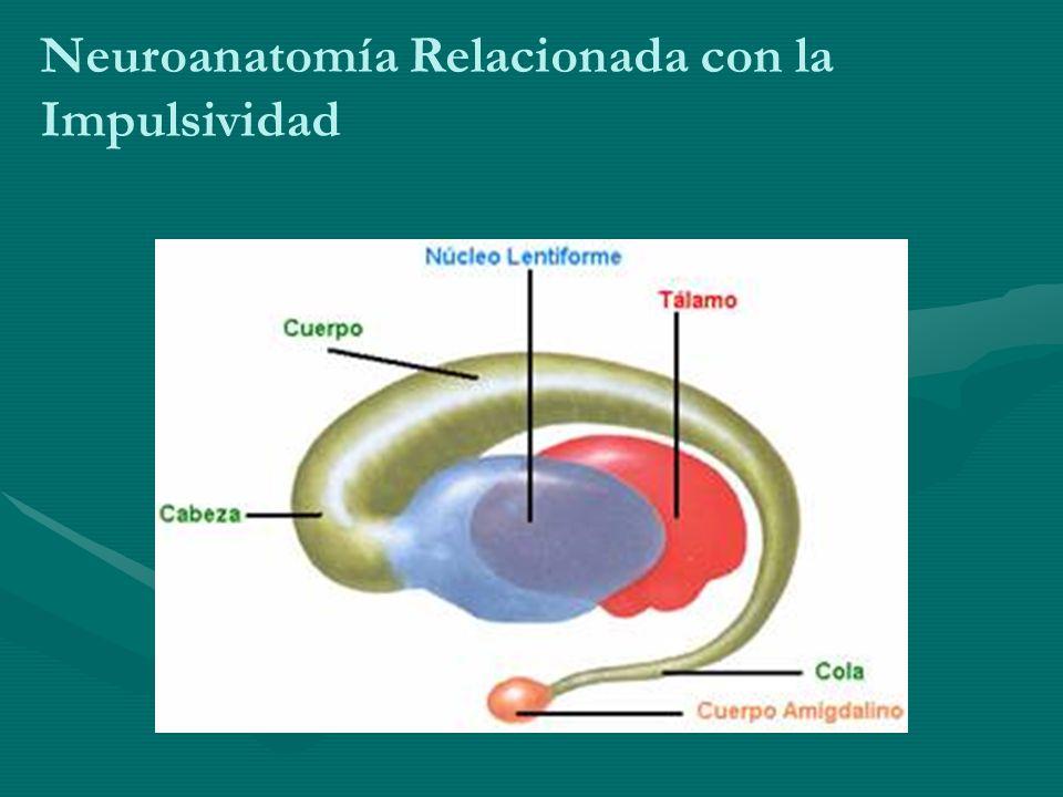 Neuroanatomía Relacionada con la Impulsividad