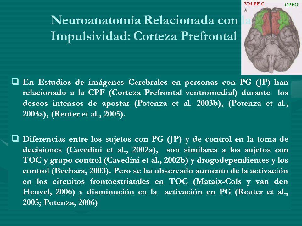 Neuroanatomía Relacionada con la Impulsividad: Corteza Prefrontal