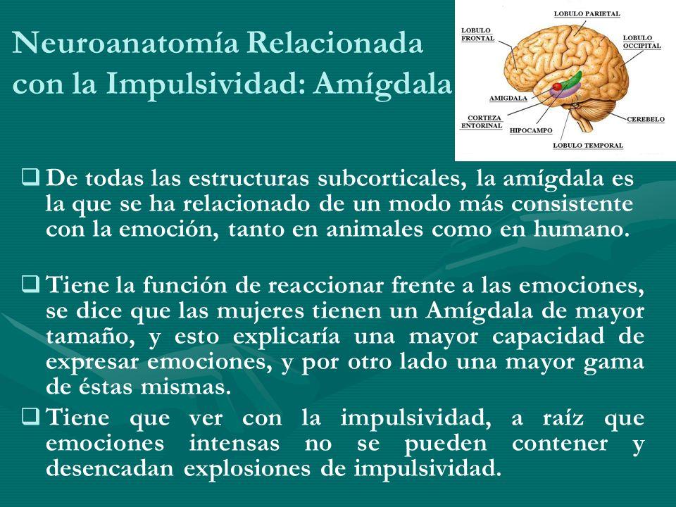 Neuroanatomía Relacionada con la Impulsividad: Amígdala