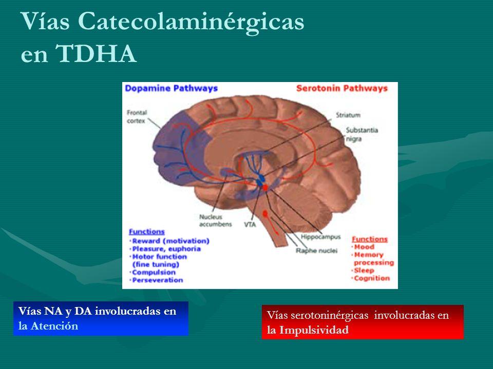 Vías Catecolaminérgicas en TDHA