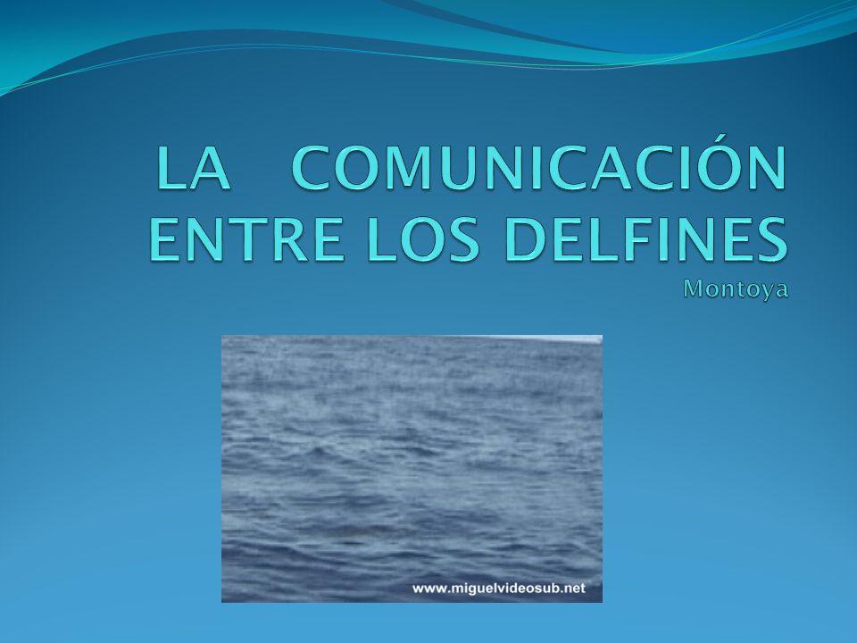 LA COMUNICACIÓN ENTRE LOS DELFINES Montoya
