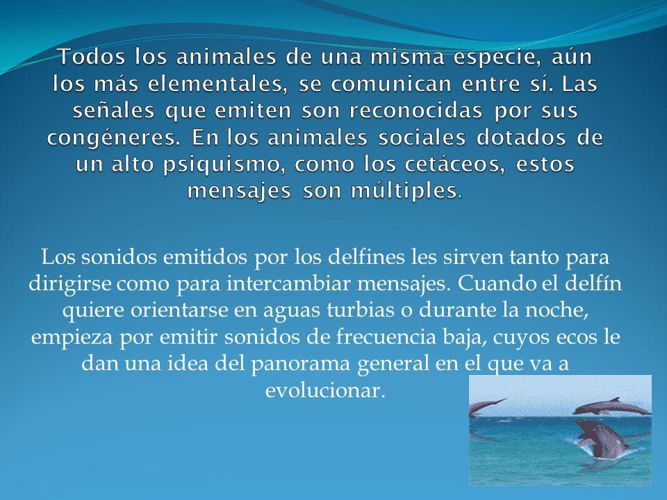 Todos los animales de una misma especie, aún los más elementales, se comunican entre sí. Las señales que emiten son reconocidas por sus congéneres. En los animales sociales dotados de un alto psiquismo, como los cetáceos, estos mensajes son múltiples.
