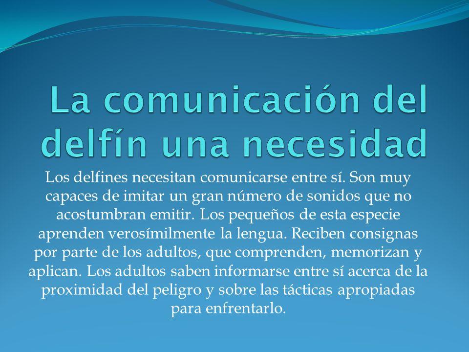 La comunicación del delfín una necesidad