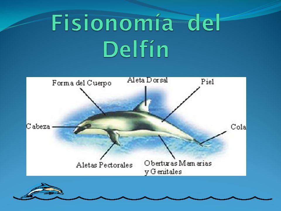 Fisionomía del Delfín