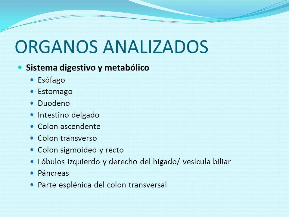 ORGANOS ANALIZADOS Sistema digestivo y metabólico Esófago Estomago