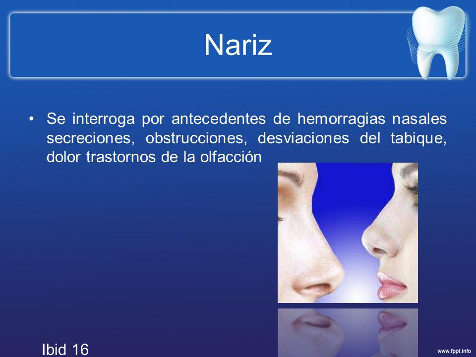 Nariz Se interroga por antecedentes de hemorragias nasales secreciones, obstrucciones, desviaciones del tabique, dolor trastornos de la olfacción.