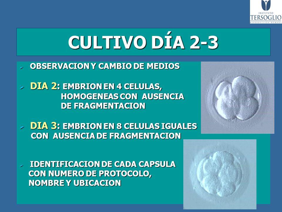 CULTIVO DÍA 2-3 DIA 2: EMBRION EN 4 CELULAS,