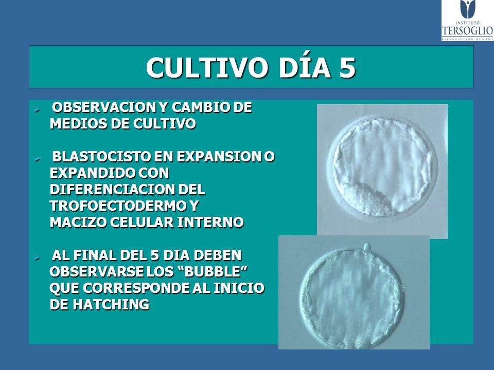 CULTIVO DÍA 5 OBSERVACION Y CAMBIO DE MEDIOS DE CULTIVO