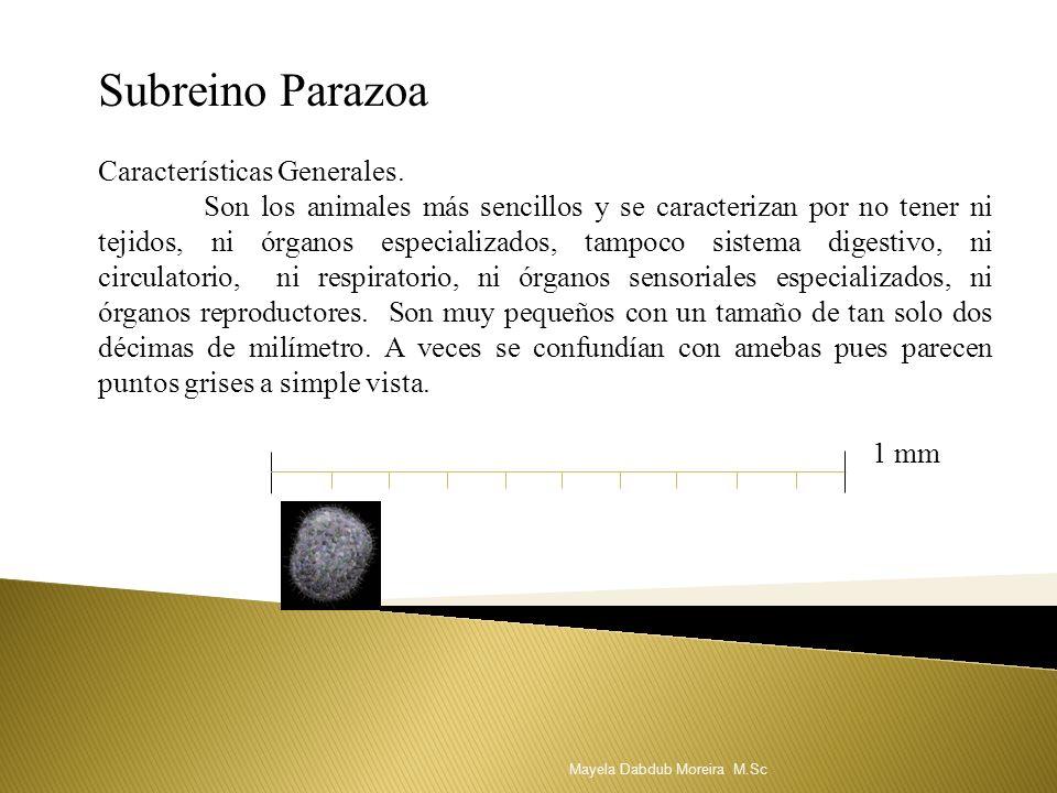 Subreino Parazoa Características Generales.
