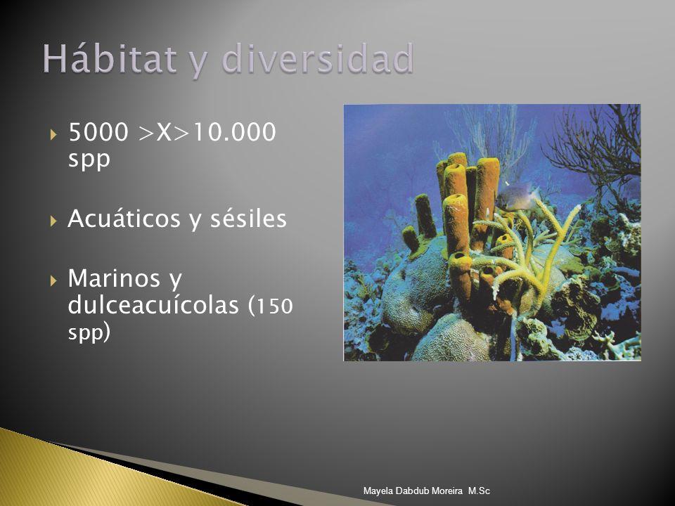 Hábitat y diversidad 5000 >X>10.000 spp Acuáticos y sésiles