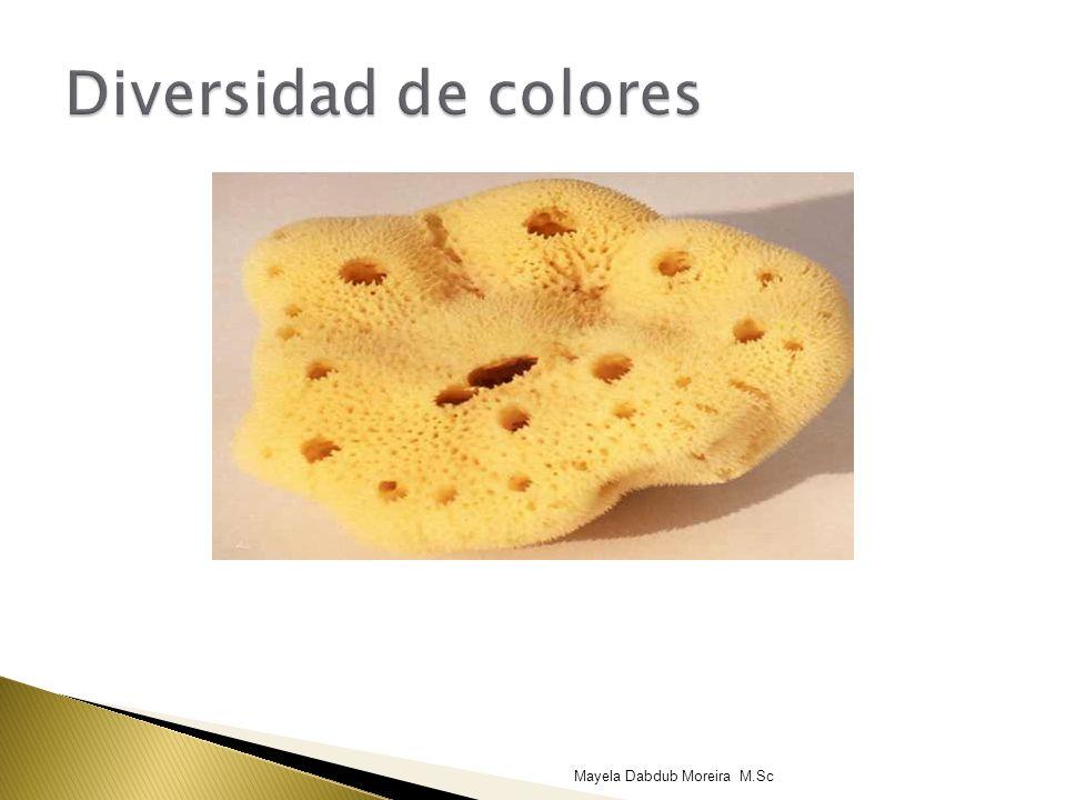 Diversidad de colores Mayela Dabdub Moreira M.Sc