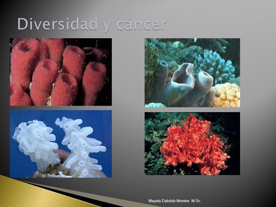 Diversidad y cáncer Mayela Dabdub Moreira M.Sc