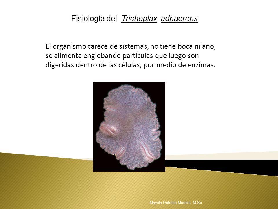 Fisiología del Trichoplax adhaerens