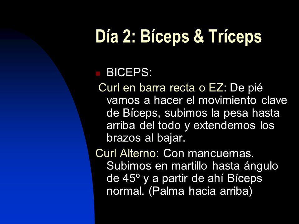 Día 2: Bíceps & Tríceps BICEPS: