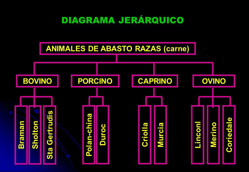 ANIMALES DE ABASTO RAZAS (carne)
