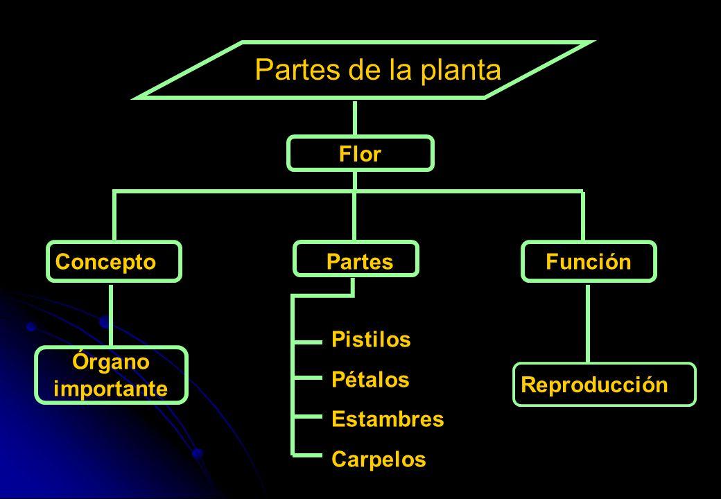 Partes de la planta Concepto Partes Función Órgano importante Pistilos