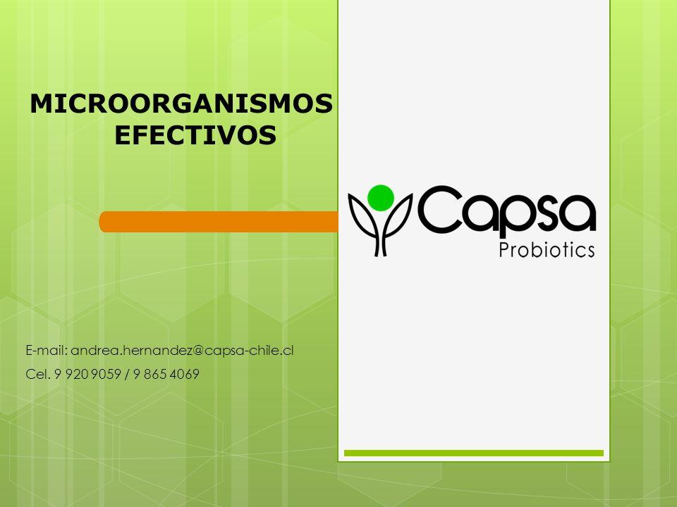 E-mail: andrea.hernandez@capsa-chile.cl Cel. 9 920 9059 / 9 865 4069
