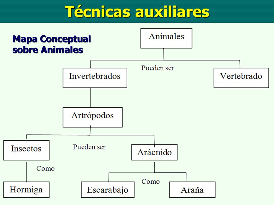 Técnicas auxiliares Mapa Conceptual sobre Animales