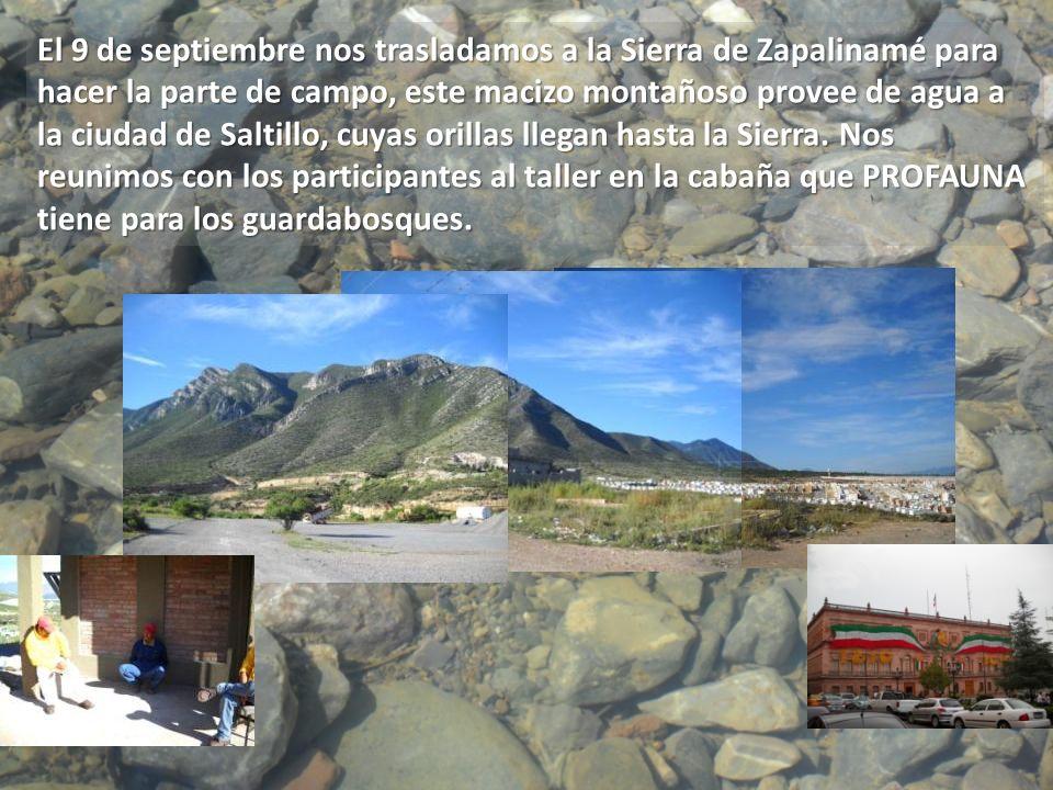El 9 de septiembre nos trasladamos a la Sierra de Zapalinamé para hacer la parte de campo, este macizo montañoso provee de agua a la ciudad de Saltillo, cuyas orillas llegan hasta la Sierra.