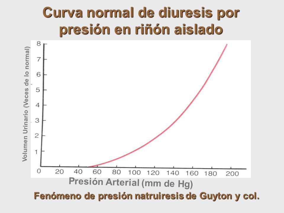 Curva normal de diuresis por presión en riñón aislado