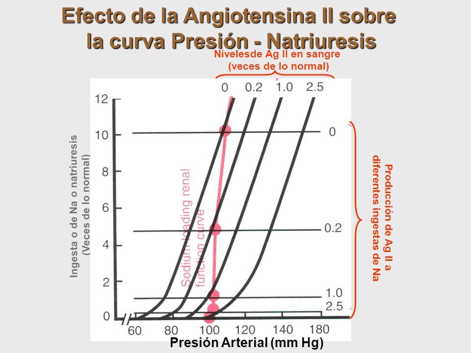 Efecto de la Angiotensina II sobre la curva Presión - Natriuresis