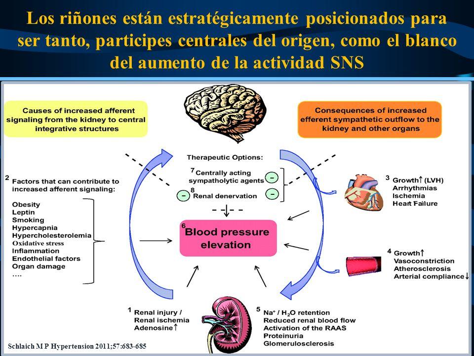 Los riñones están estratégicamente posicionados para ser tanto, participes centrales del origen, como el blanco del aumento de la actividad SNS