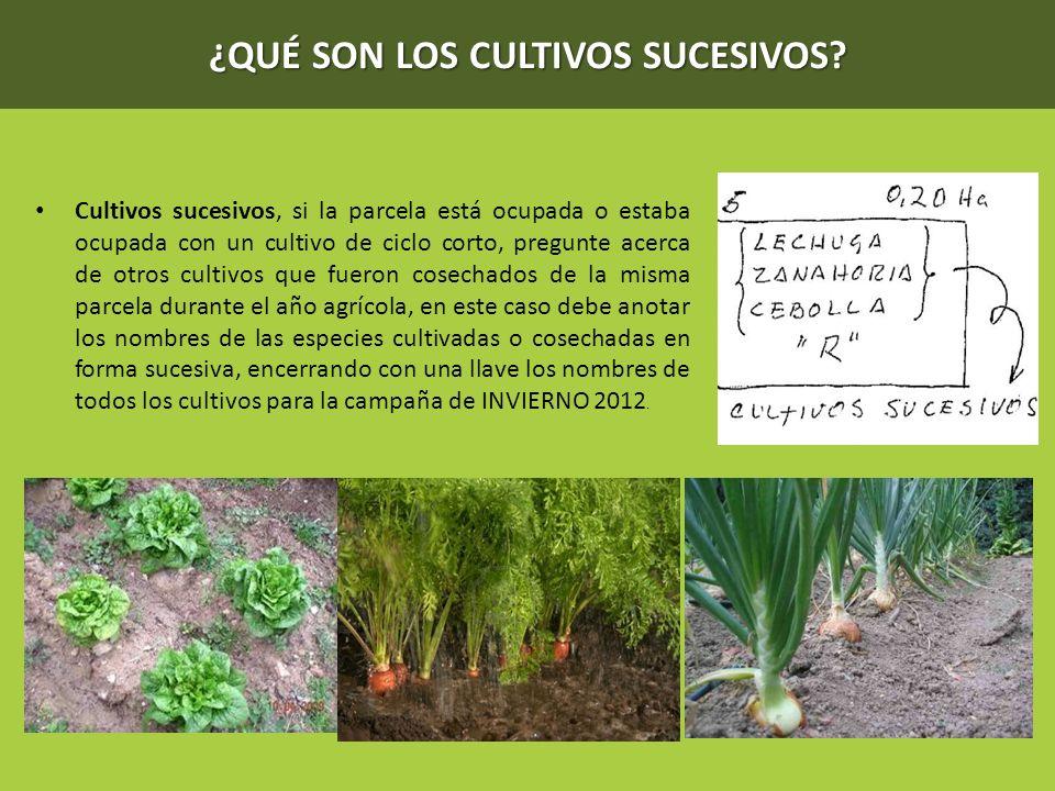 Cap tulo iv uso de la tierra ppt descargar for Que son cultivos asociados