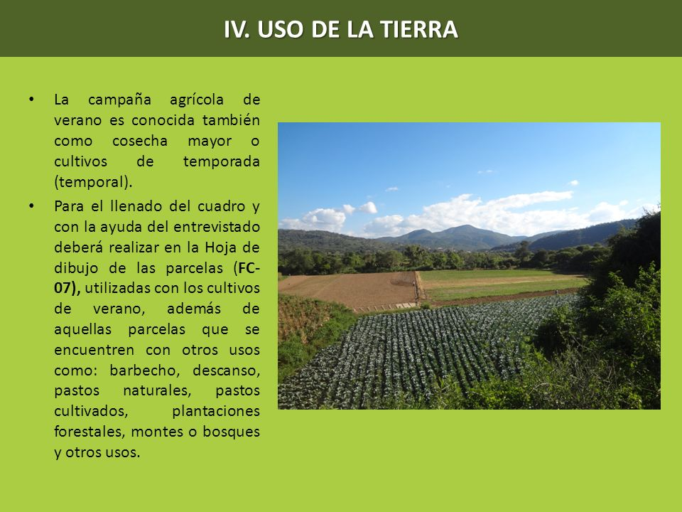 IV. USO DE LA TIERRA La campaña agrícola de verano es conocida también como cosecha mayor o cultivos de temporada (temporal).