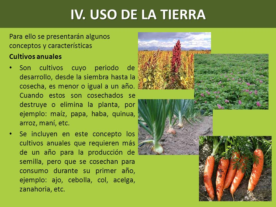 IV. USO DE LA TIERRA Para ello se presentarán algunos conceptos y características. Cultivos anuales.