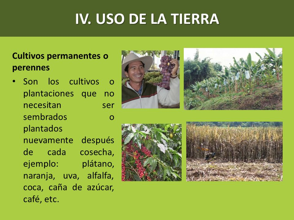 IV. USO DE LA TIERRA Cultivos permanentes o perennes