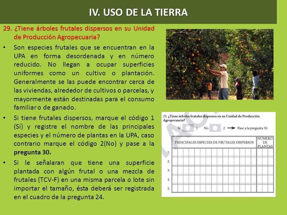 IV. USO DE LA TIERRA 29. ¿Tiene árboles frutales dispersos en su Unidad de Producción Agropecuaria