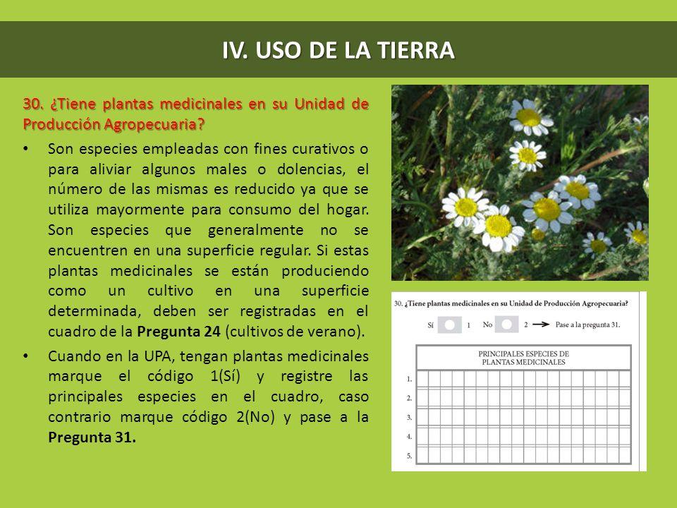 IV. USO DE LA TIERRA 30. ¿Tiene plantas medicinales en su Unidad de Producción Agropecuaria