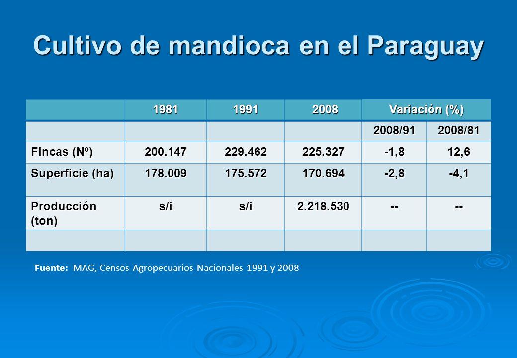 Cultivo de mandioca en el Paraguay