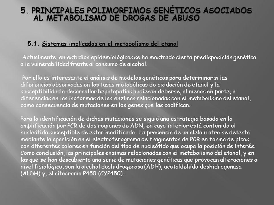 5. PRINCIPALES POLIMORFIMOS GENÉTICOS ASOCIADOS AL METABOLISMO DE DROGAS DE ABUSO